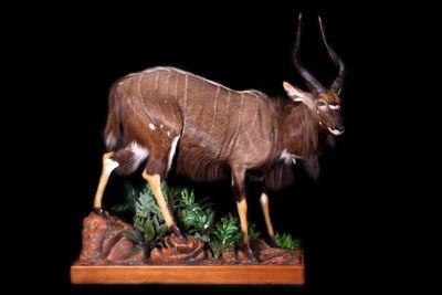 Galéria - Preparovanie zvierat c4b12634559
